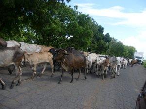 Nicaragua traffic jam3